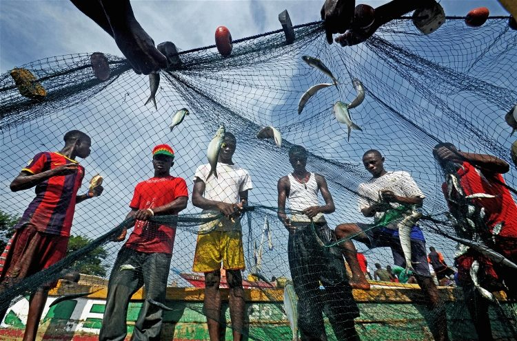 Illegal fishing sierra leone united nations blog for Sierra fish in english